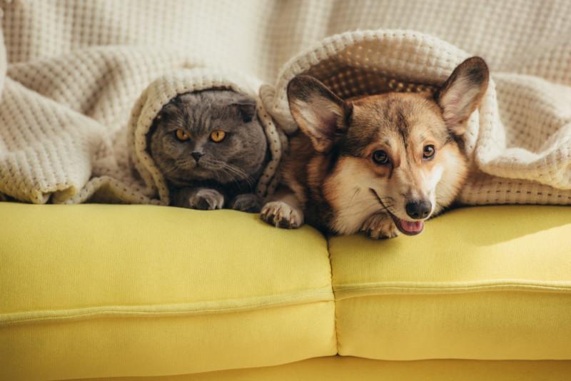 犬 キャットフード 猫 ドッグフード