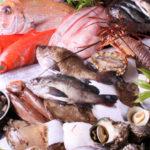 ドッグフード 魚原料