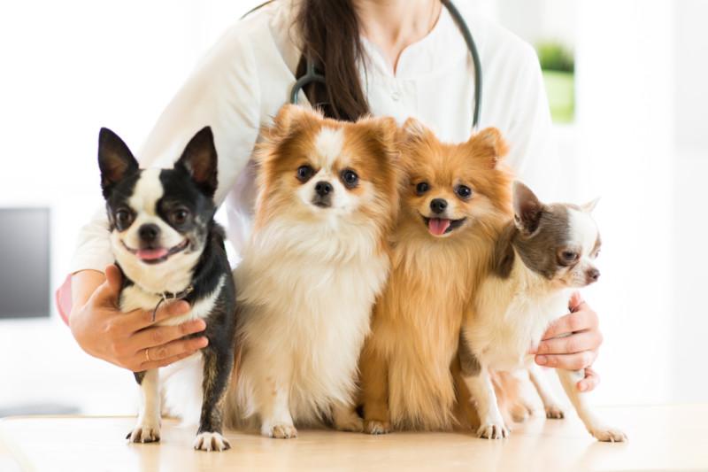 犬 かかりやすい病気