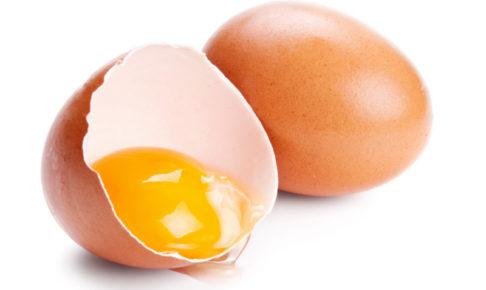 ドッグフード 卵