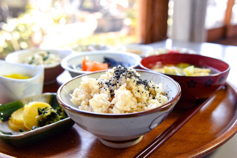 玄米 ドッグフード