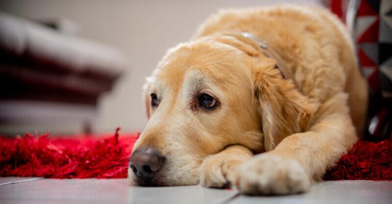 犬 吐く 原因 理由 病気