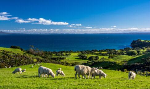 ニュージーランド ドッグフード